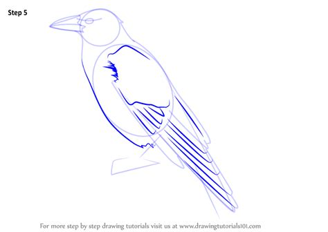 Learn How to Draw a Carrion Crow (Birds) Step by Step
